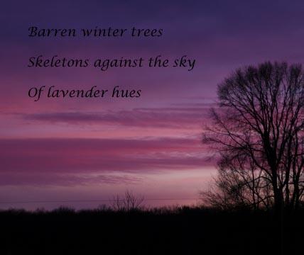 LavenderDawn