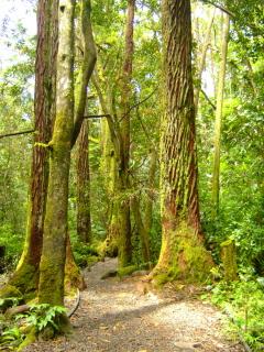manoa-falls-trail.jpg