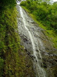 manoa-falls.jpg