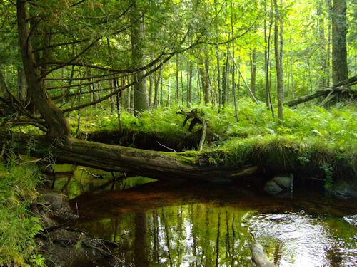 hendricks-creek