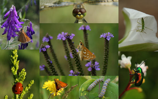 insects-2